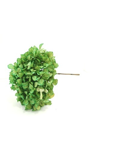 Kuru Çiçek Deposu Yeşil (Natural) Tek Dal Solmayan Ortanca Yeşil